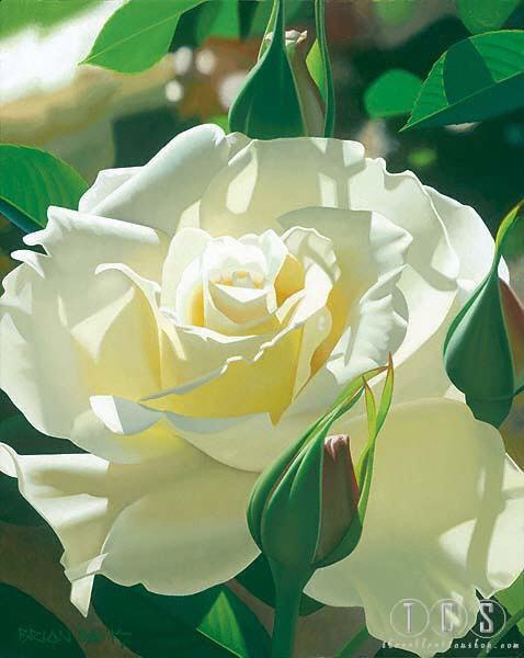 Brian DavisPale Yellow Beauty