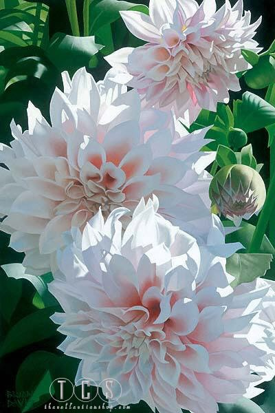 Brian Davis Three Pink Dahlias
