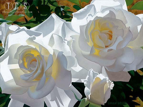 Brian DavisWhite Radiant Roses