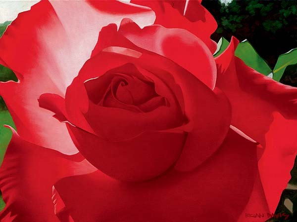 Brian Davis Brilliant Red Solo Rose