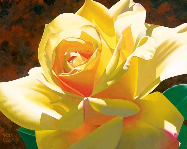 Brian Davis Golden Solo Rose
