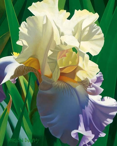 Brian Davis Kauais Tropical Beauty