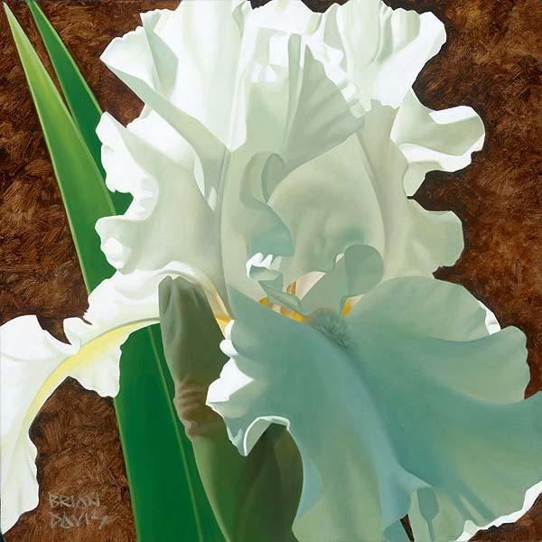 Brian DavisSolitary White Iris