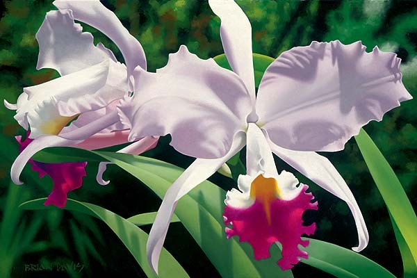 Brian Davis White And Magenta Orchids