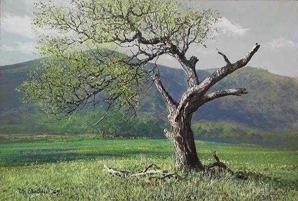 Peter EllenshawLone OakGiclee On Canvas