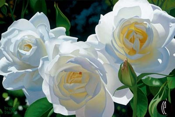 Brian Davis Sunny Afternoon Roses