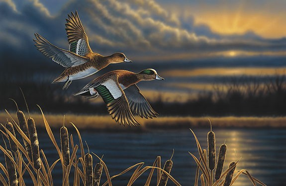 Richard CliftonWidgeon - Out Front Limited Edition Print