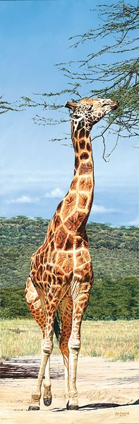 Guy Combes Rothschild Giraffe Nakuru Park MASTERWORK EDITION ON Canvas
