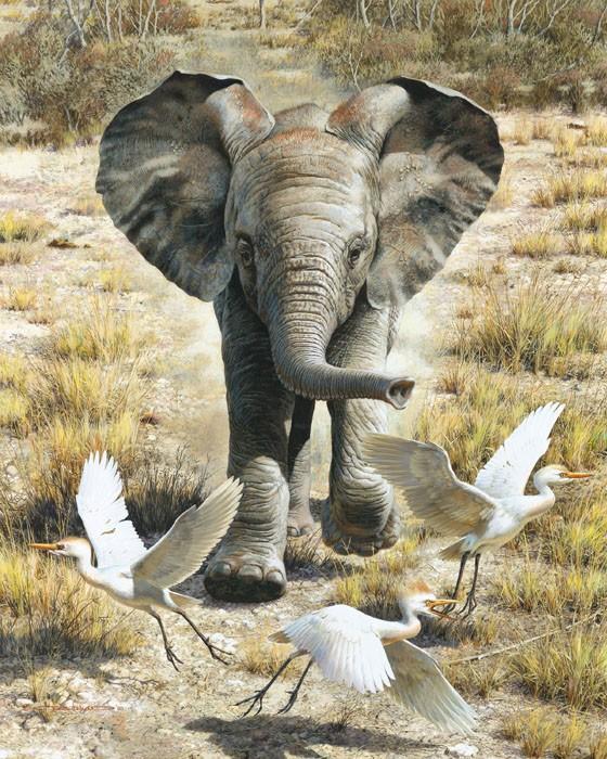 Carl BendersFlushing Egrets-Elephant Calf