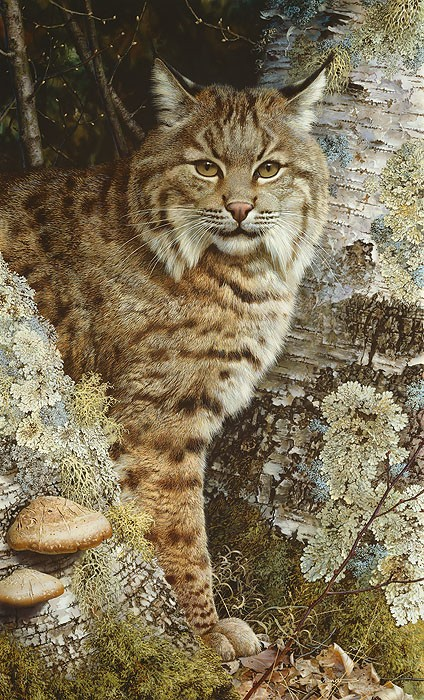 Carl Benders FOREST SENTINEL Giclee On Canvas