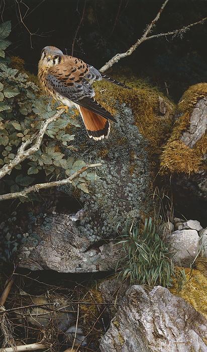 Carl BendersLEC Riverbank KestrelGiclee On Canvas