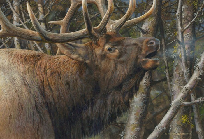 Carl Benders Mating Call Bull Elk Giclee On Canvas