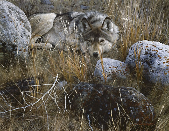 Carl Benders One to One - Gray Wolf Giclee On Canvas