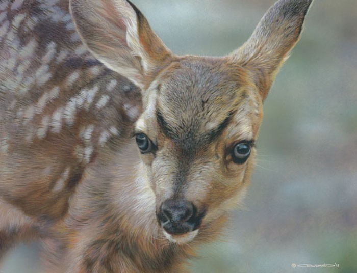 Carl BendersSpotted - Mule Deer FawnGiclee On Canvas