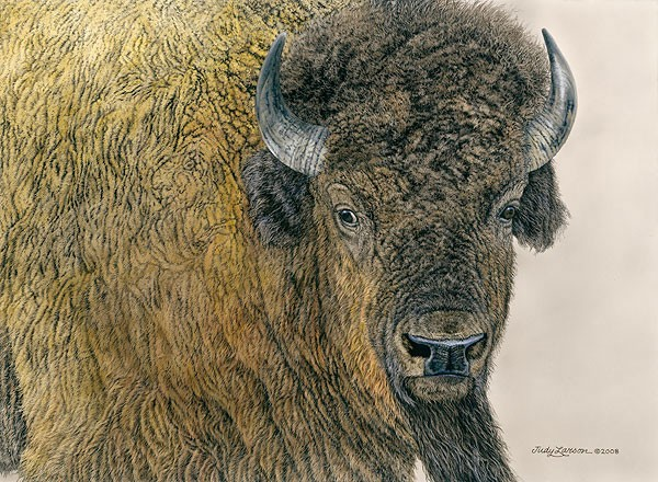 Judy Larson Slow Bull Canvas