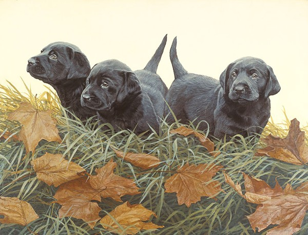 John Weiss Lab Puppies ANNIVERSARY EDITION ON Canvas