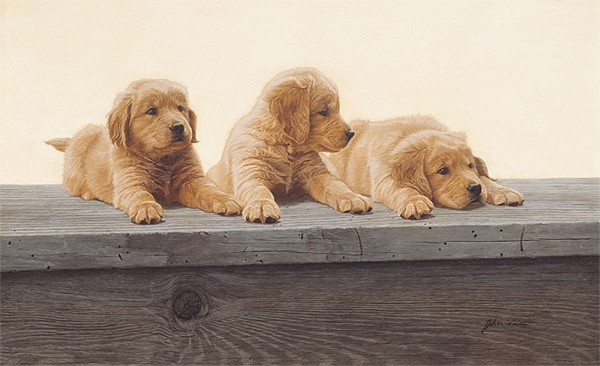 John Weiss Golden Retriever Puppies ANNIVERSARY EDITION ON Canvas