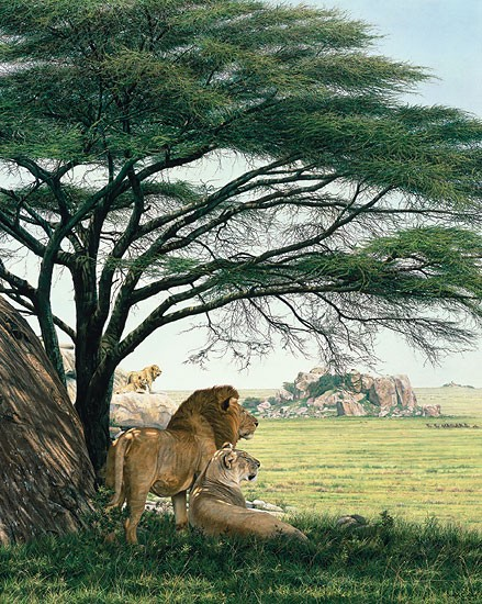 Simon Combes An African Experience MASTERWORK EDITION ON Canvas