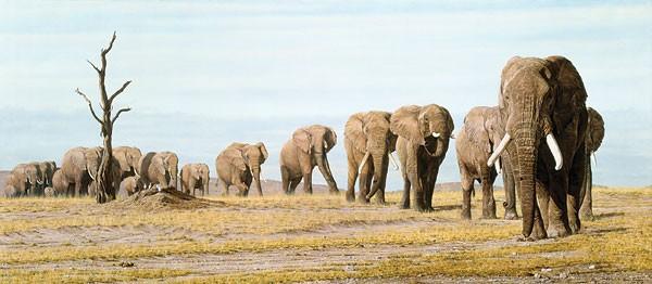 Simon CombesThe Last Elephants MUSEUM EDITION ONCanvas