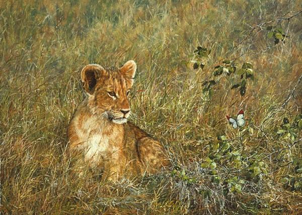 Simon Combes Lion Cub and Butterfly SMALLWORK EDITION ON Canvas
