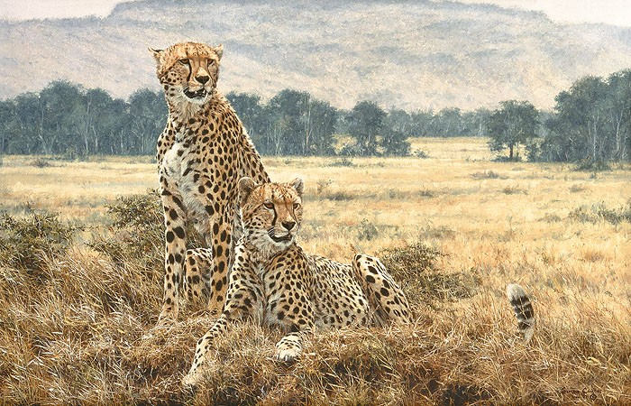 Simon Combes Cheetah Pair Canvas
