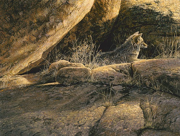 Stephen Lyman Coyote Afternoon SMALLWORK EDITION ON Canvas