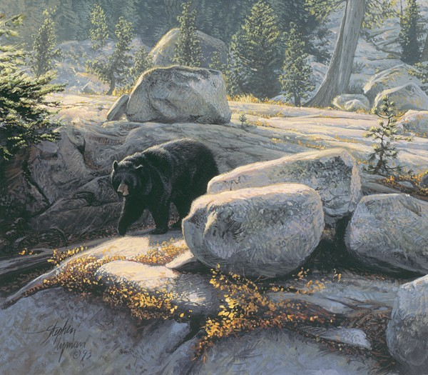 Stephen Lyman Boulder Bruin SMALLWORK EDITION ON Canvas
