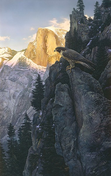 Stephen LymanReturn of the Falcon ANNIVERSARY EDITION ONCanvas