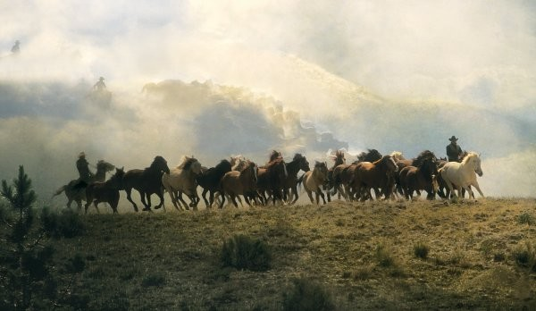 Norm Clasen Dream Herd By Norm Clasen Giclee On Canvas  Grande Edition