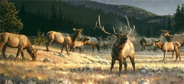 Nancy Glazier Rocky Mountain Meadow By Nancy Glazier Giclee On Canvas  Signed & Numbered