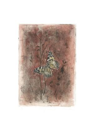 Gamboa - Mariposa I