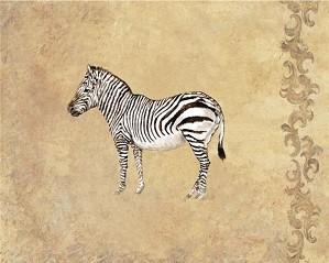 Gamboa - Wild Zebra