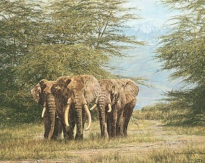 Simon Combes Amboseli Ancients Limited Edition Print