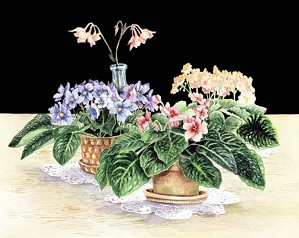 Gamboa-African Violets