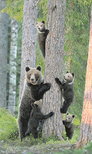 John Bye-Tree Huggers