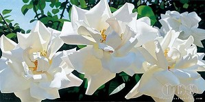 Brian Davis-Radiant Rose Quartet