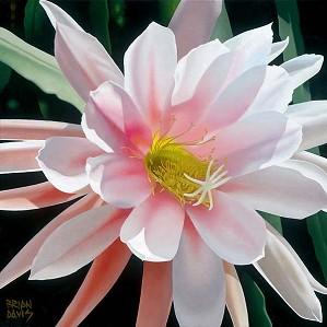 Brian Davis-Blushing Beauty