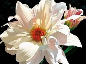 Brian Davis-Coral Splendor