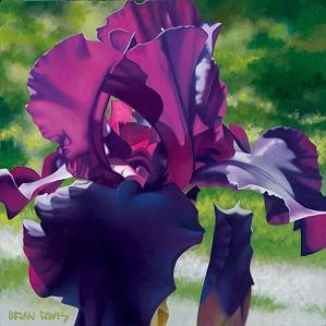 Brian Davis-Passionate Purple Iris