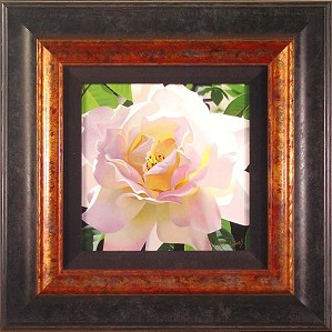 Brian Davis-Single Pristine Rose Framed