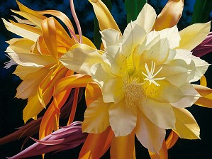 Brian Davis-Splendid Elegance