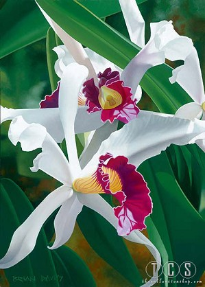 Brian Davis-Captivating Cattleya