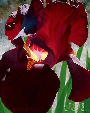 Brian Davis-Deep Red Iris Aflame