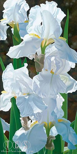 Brian Davis-Enchanting Irises