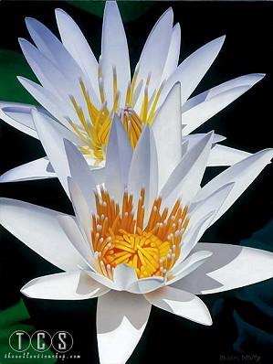 Brian Davis-Water Lily Duet