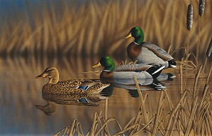 Richard Clifton-Afternoon Mallards Limited Edition Print