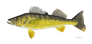 Flick Ford-Walleye Limited Edition Canvas