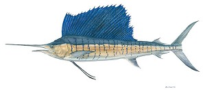Flick Ford-Sailfish Limited Edition Canvas