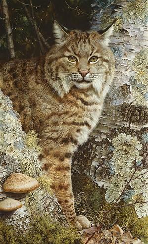 Carl Benders-FOREST SENTINEL