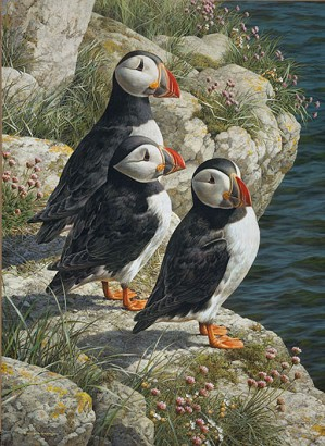 Carl Benders-Fisherman´s Wharf - Puffins